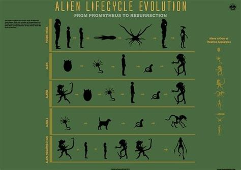 A Complete Guide to 'Alien' Xenomorph Biology | Inverse