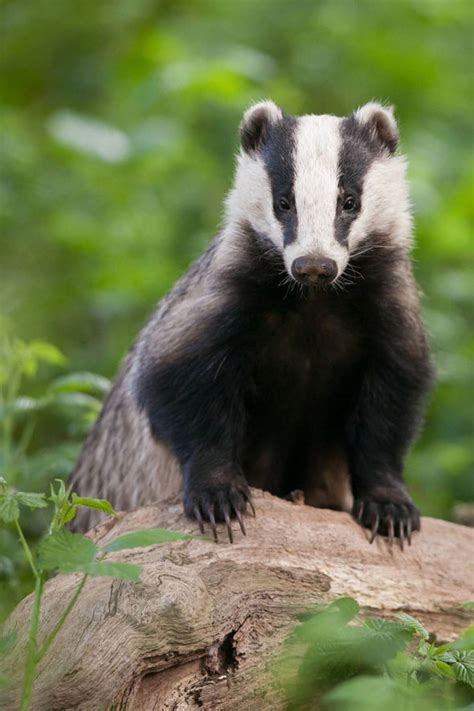 The most innovative British wildlife protection schemes