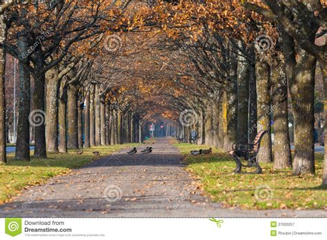 Colorful Autumn Park Scenery With Ducks Royalty Free Stock