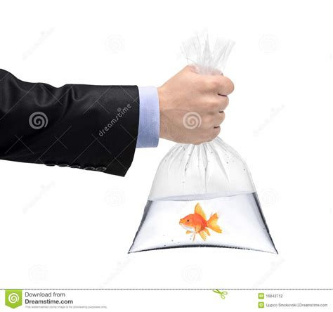 A Hand Holding A Plastic Bag With A Golden Fish Stock